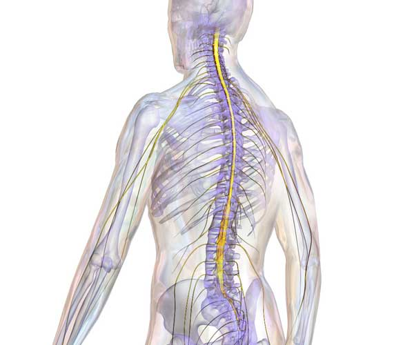 Spinal Cord Injury Overview - Medical Malpractice Lawyers